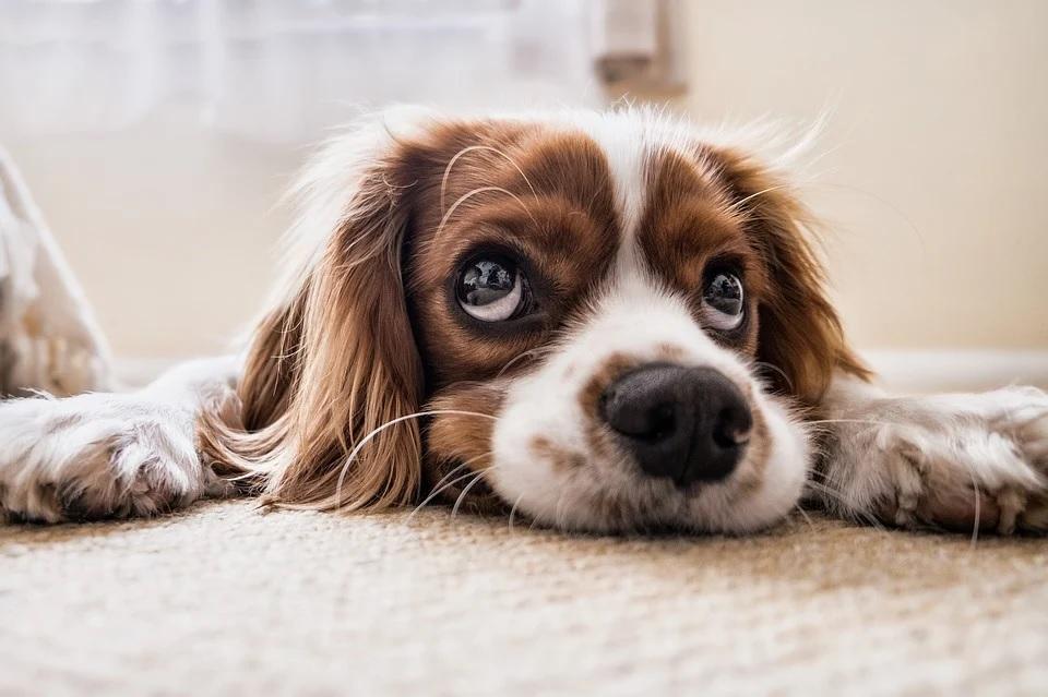В Смоленске убивают собак на Королевке