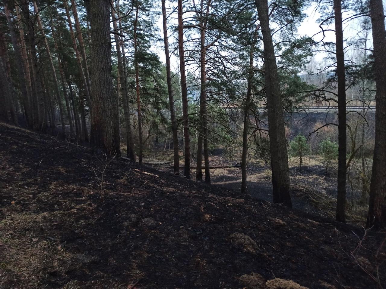 Выжженная земля: в смоленском поселке Гнездово вспыхнул лес