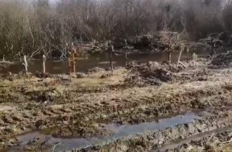 Могилы в воде: как на кладбище в Селифоново хоронят бездомных и одиноких смолян?