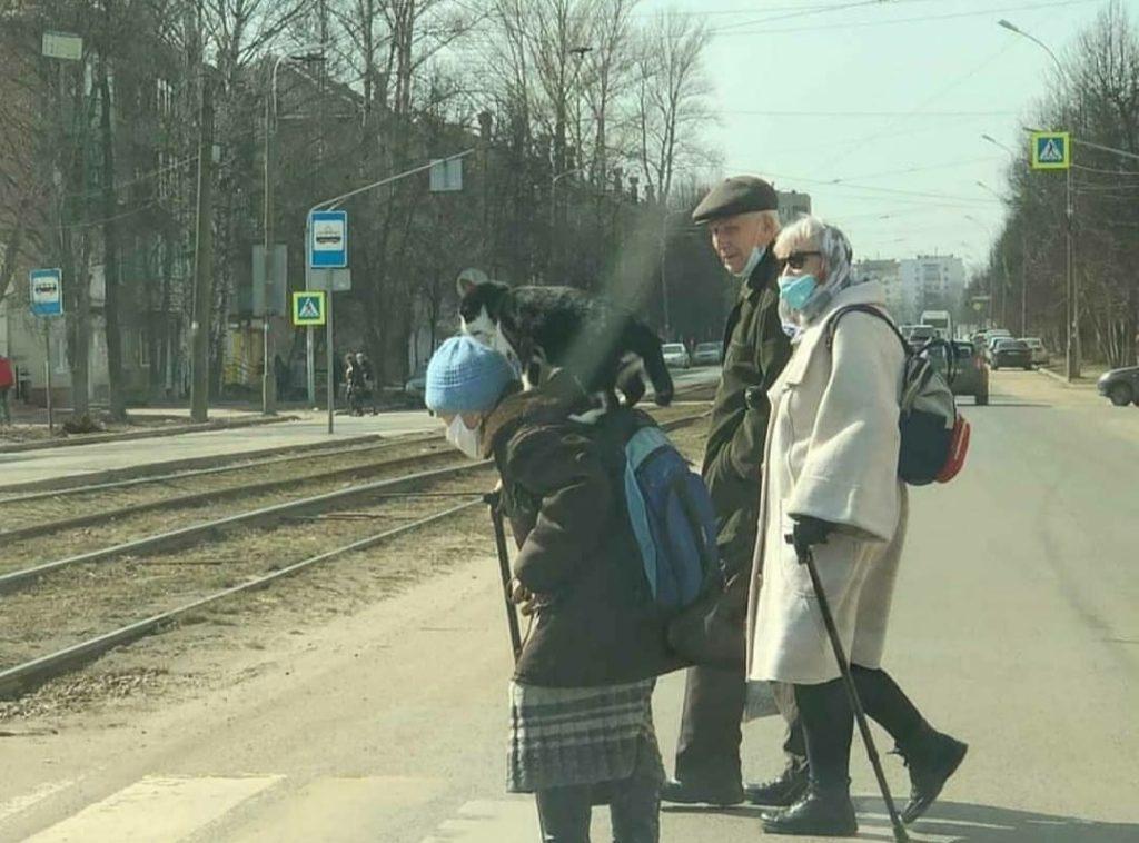 Кот на плече: смоленская пенсионерка не расстается с питомцем даже в автобусе