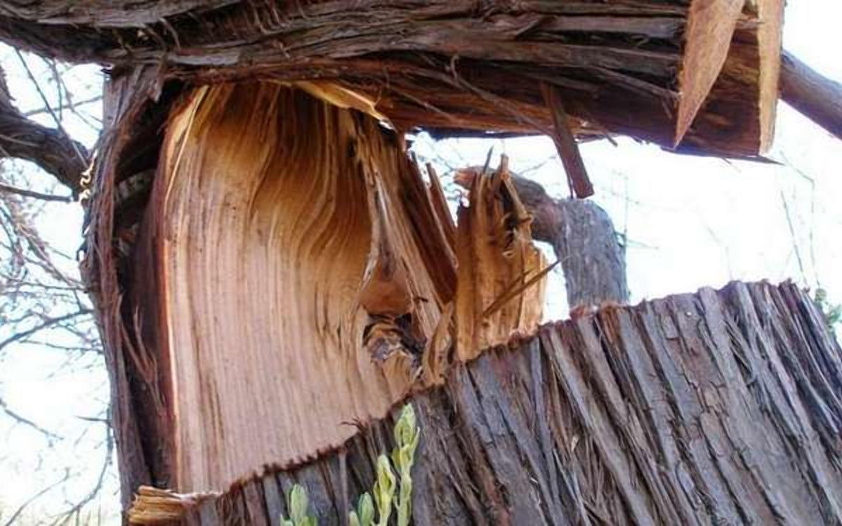 Смолянка умерла из-за упавшего дерева