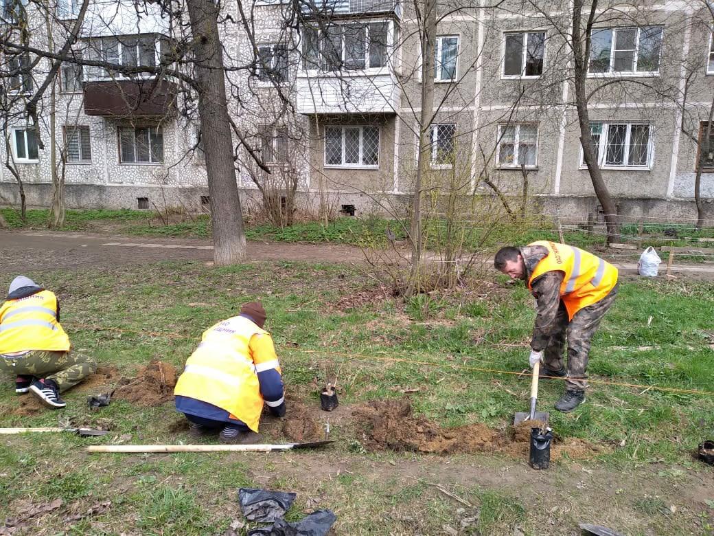 Смоленские коммунальщики высадили 700 саженцев во дворах города
