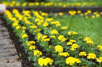 6 тысяч цветов высадили в Лопатинском саду в Смоленске
