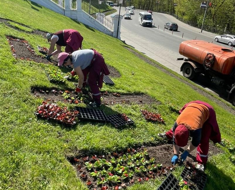 Соборный холм в Смоленске украшают цветами