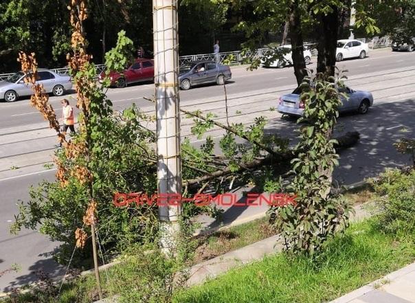 В Смоленске упавшее дерево перекрыло улицу Николаева