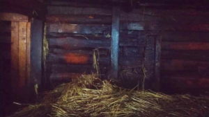 В Смоленске хрюшка, лошадь и три теленка чуть не погибли в огне